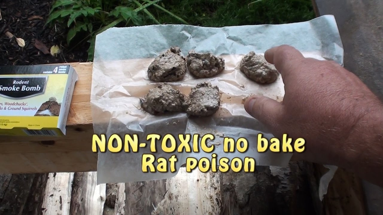 Best ideas about DIY Mouse Poison . Save or Pin Killing RATS What works Non toxic homemade killer or Now.