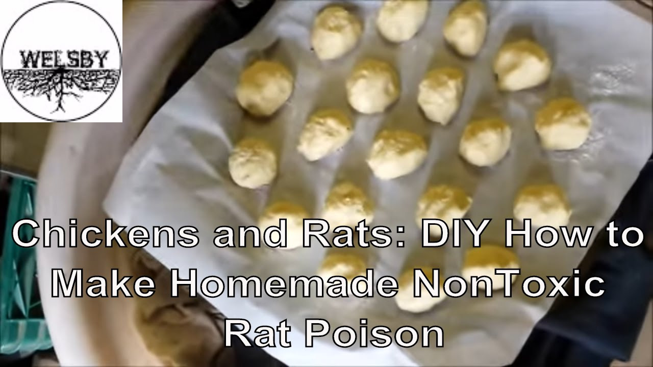 Best ideas about DIY Mouse Poison . Save or Pin Chickens and Rats DIY How to Make Homemade NonToxic Rat Now.
