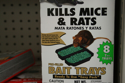 Best ideas about DIY Mouse Poison . Save or Pin Homemade Rat Poison That Works & Costs Pennies Now.