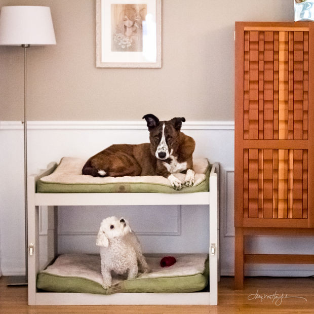 Best ideas about DIY Pet Beds . Save or Pin DIY Dog Bunk Beds 8 Steps with Now.