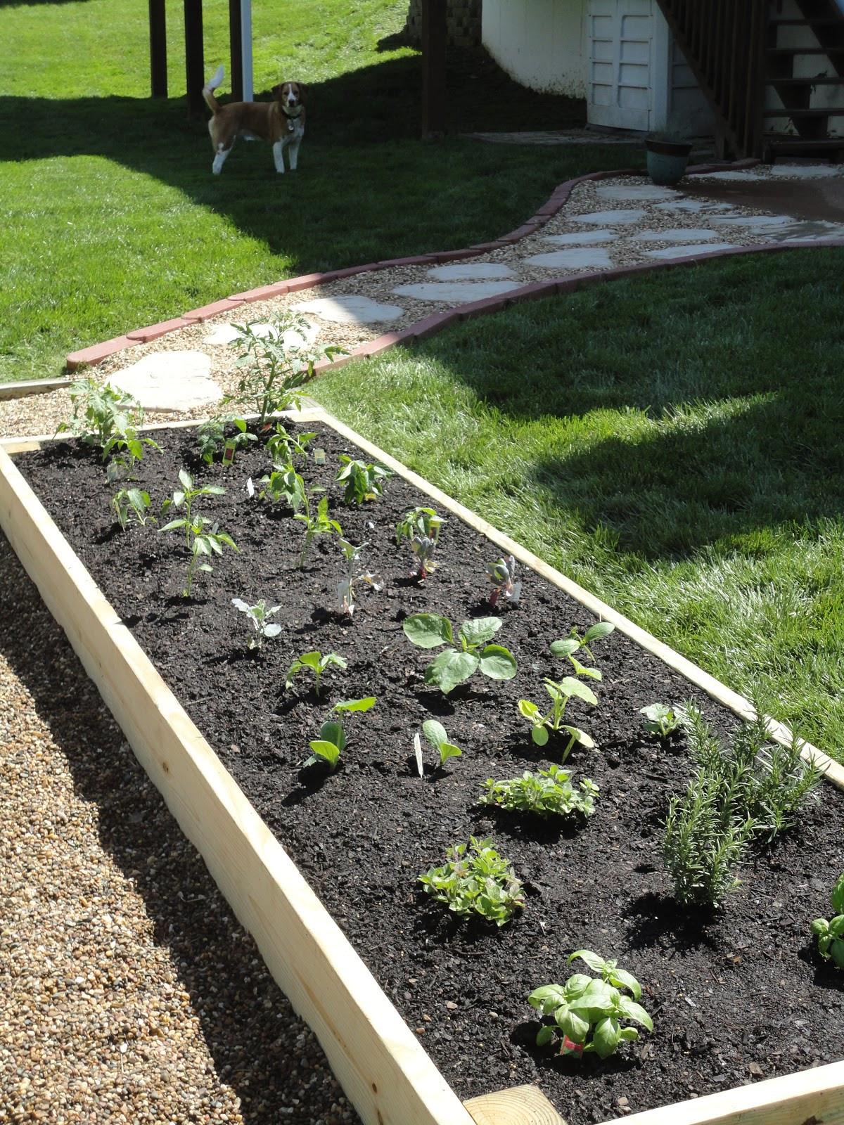 Best ideas about DIY Raised Beds Garden . Save or Pin Vanilla Bean DIY Raised Garden Bed Now.