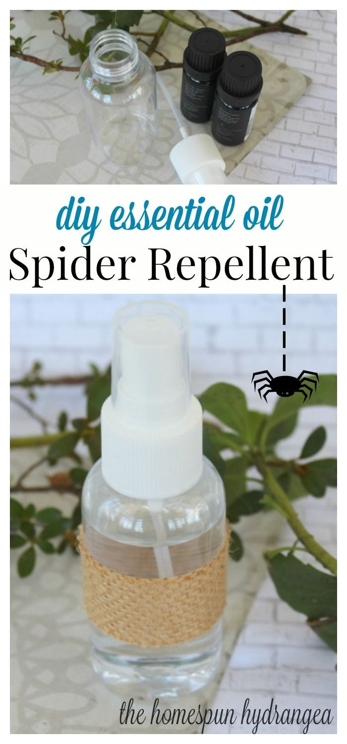 Best ideas about DIY Spider Killer . Save or Pin 25 unique Homemade spider spray ideas on Pinterest Now.