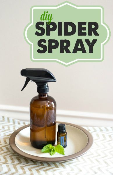 Best ideas about DIY Spider Killer . Save or Pin 17 Best ideas about Homemade Spider Spray on Pinterest Now.