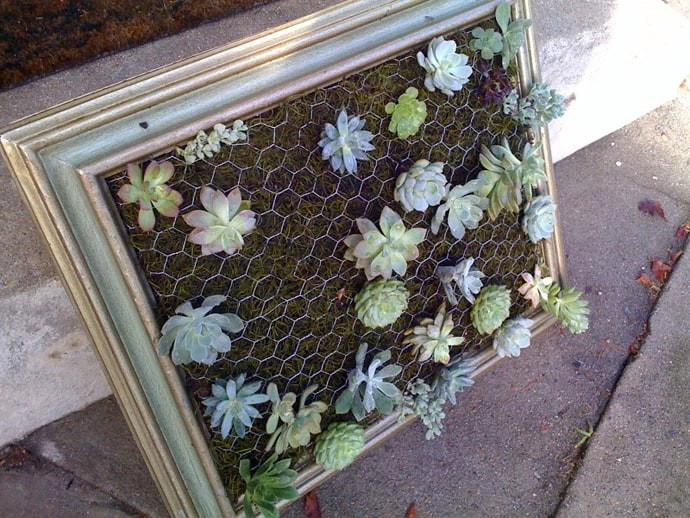 Best ideas about DIY Succulent Wall . Save or Pin Cool DIY Green Living Wall Projects For Your Home Now.