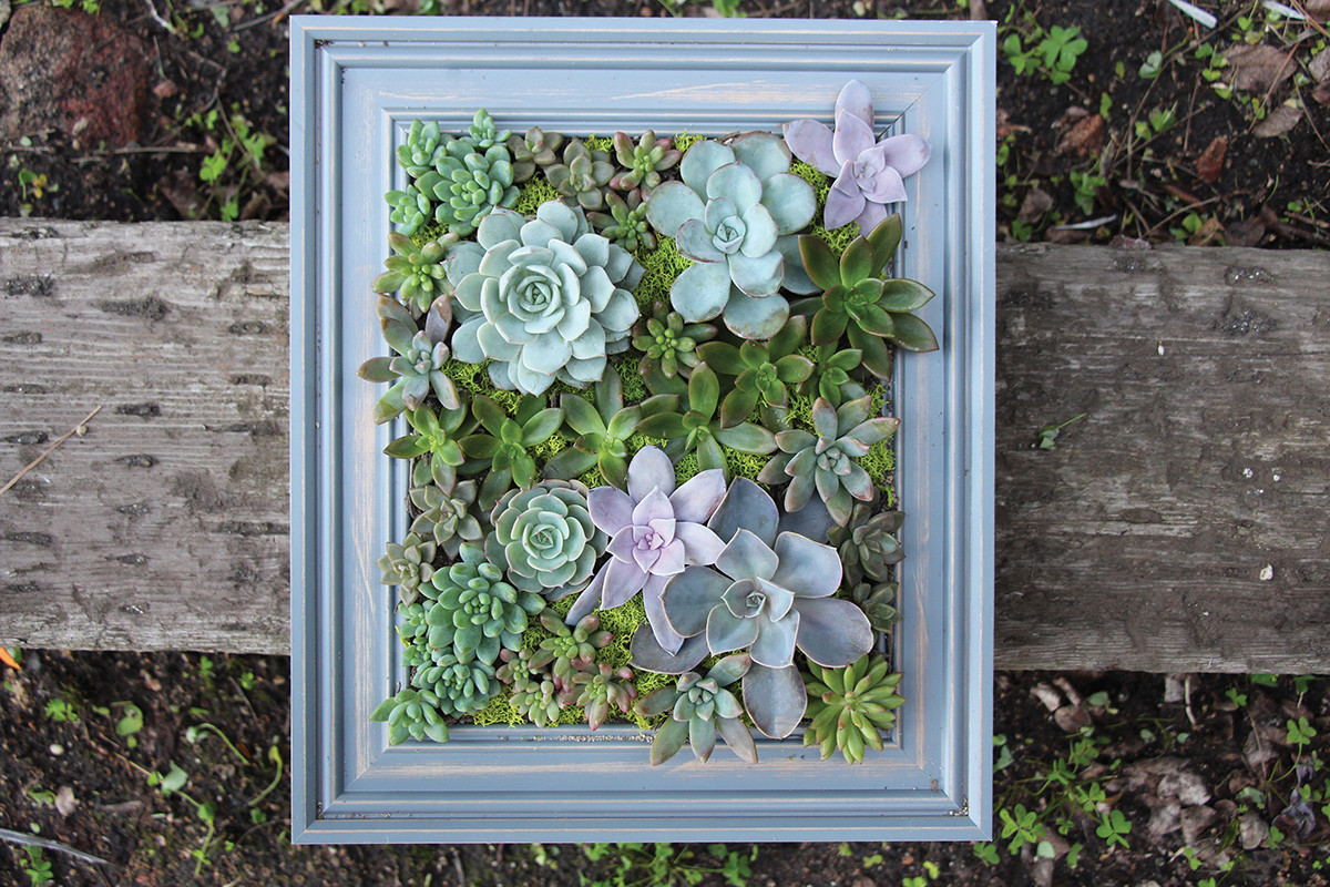 Best ideas about DIY Succulent Wall . Save or Pin DIY a Framed Succulent Wall Planter Do It Yourself Now.