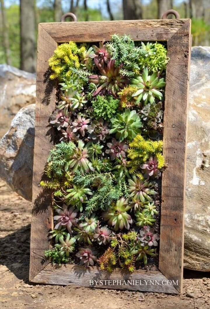 Best ideas about DIY Succulent Wall . Save or Pin DIY Succulent Projects 60 Ways to Display Succulents in Now.