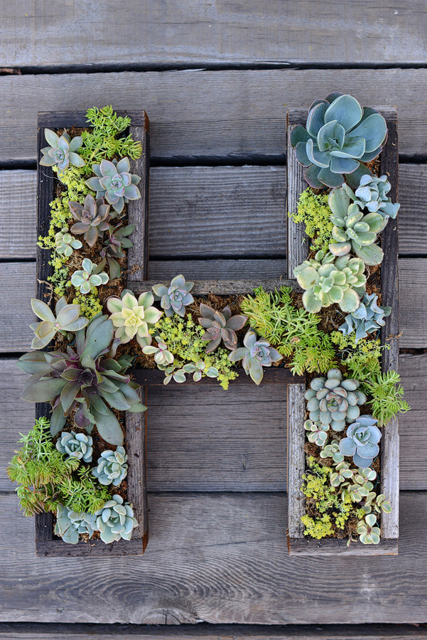 Best ideas about DIY Succulent Wall . Save or Pin Wall Mounted Succulent Letter DIY Now.