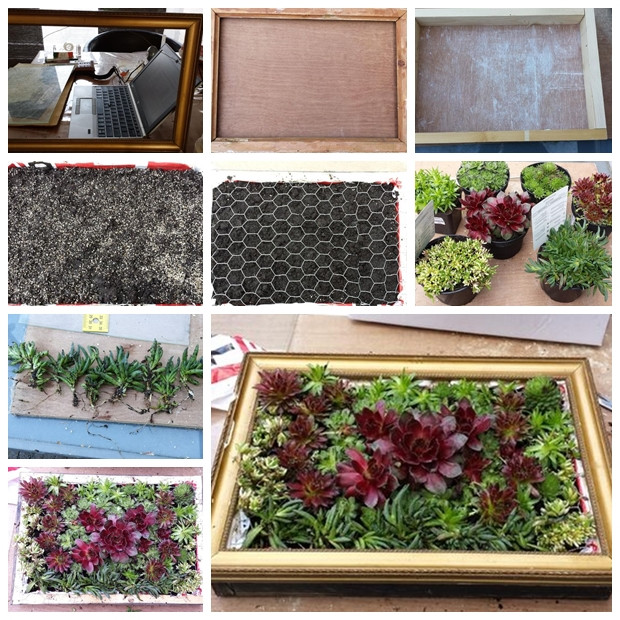 Best ideas about DIY Succulent Wall . Save or Pin Wonderful DIY A Living Succulent Picture Now.