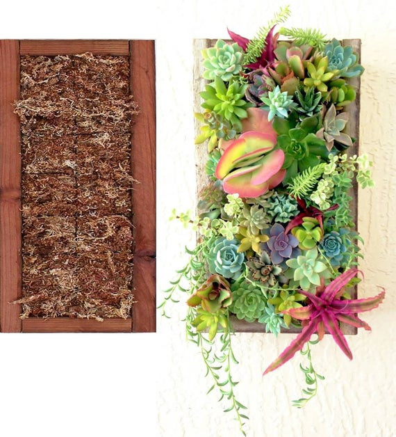 Best ideas about DIY Succulent Wall . Save or Pin DIY Vertical Planter Succulent Wall Planter 16 inch by 9 inch Now.