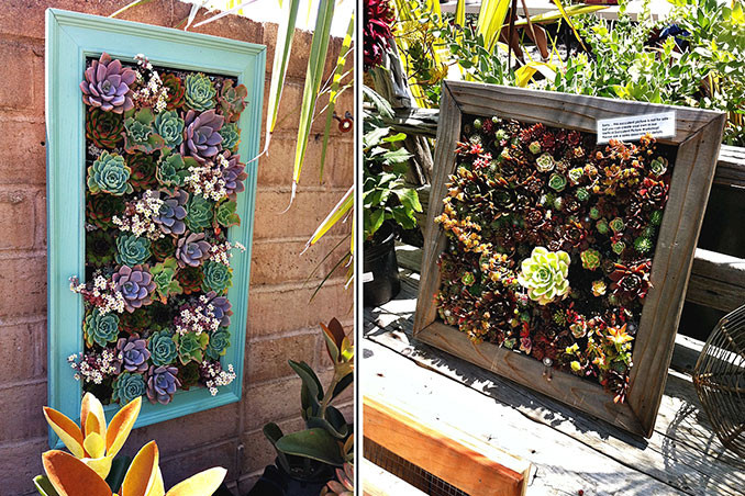 Best ideas about DIY Succulent Wall . Save or Pin DIY Framed Succulent Wall Decor Now.