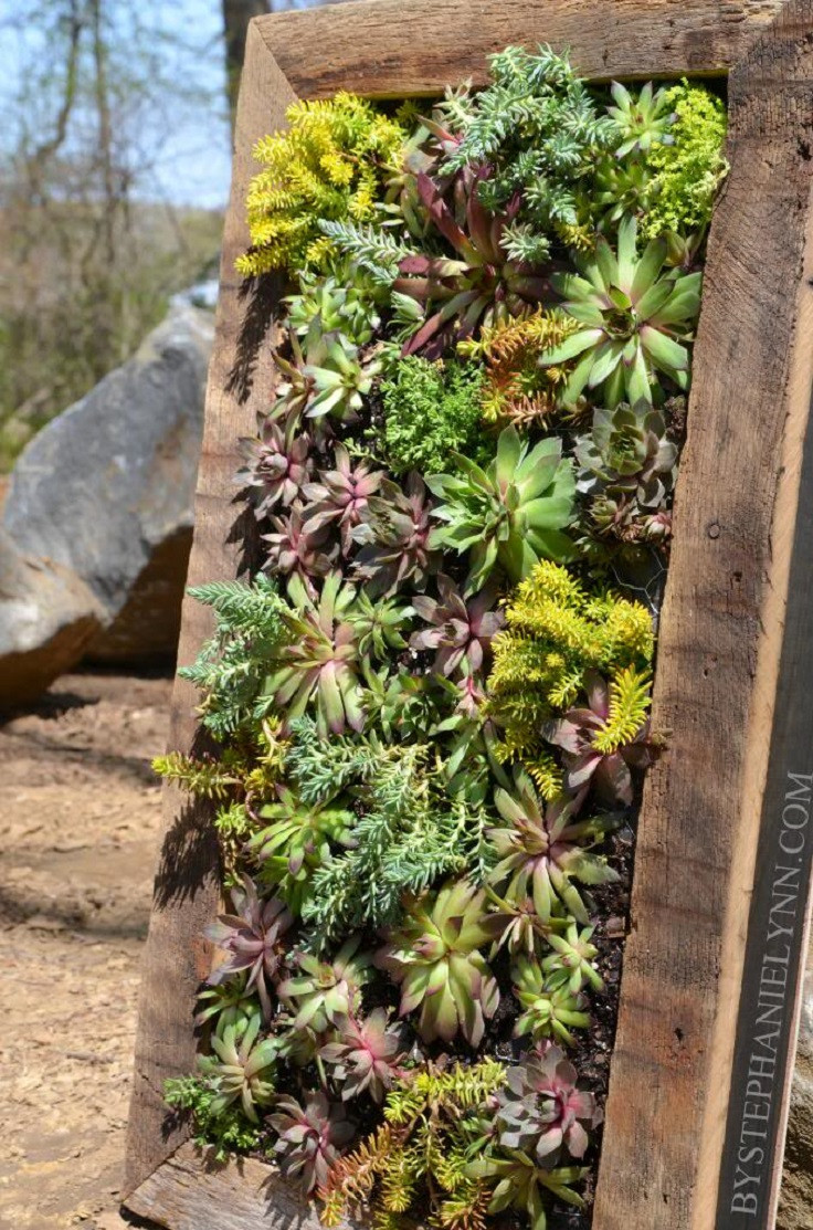 Best ideas about DIY Succulent Wall . Save or Pin TOP 10 DIY Outdoor Succulent Garden Ideas Top Inspired Now.