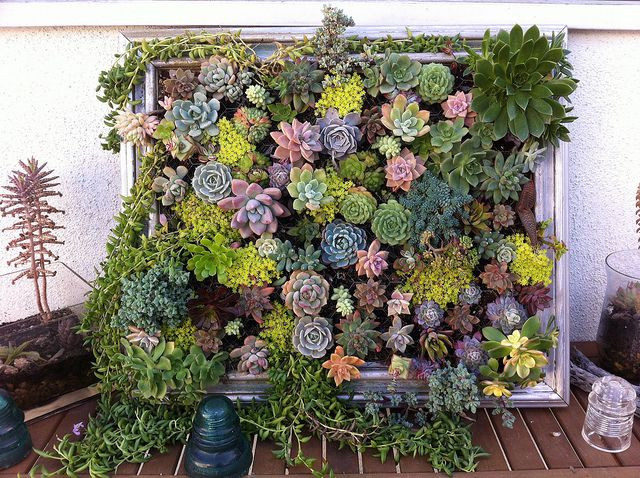 Best ideas about DIY Succulent Wall . Save or Pin 25 Creative DIY Vertical Gardens For Your Home Now.