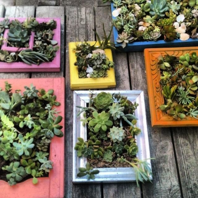 Best ideas about DIY Succulent Wall . Save or Pin 34 best Living Wall Shade Loving Plants for Vertical Now.