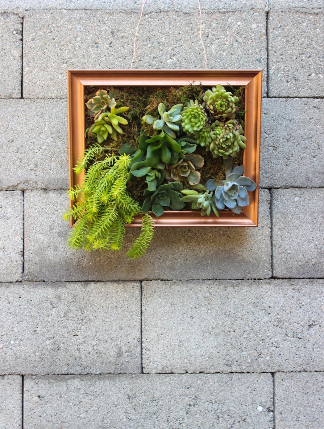 Best ideas about DIY Succulent Wall . Save or Pin Thrifted Genius Succulent Wall Art Darling Magazine Now.