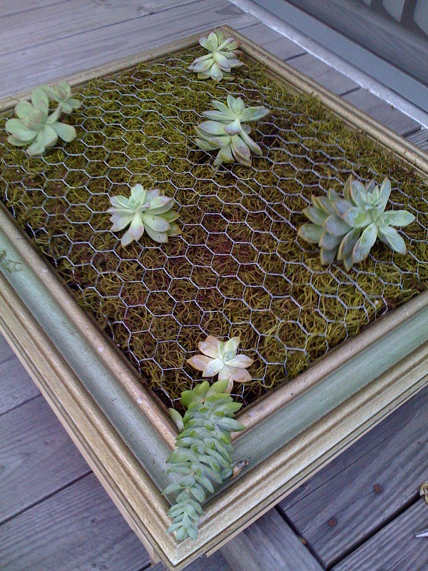 Best ideas about DIY Succulent Wall . Save or Pin Luna See DIY Tutorial Framed Vertical Succulent Garden Now.