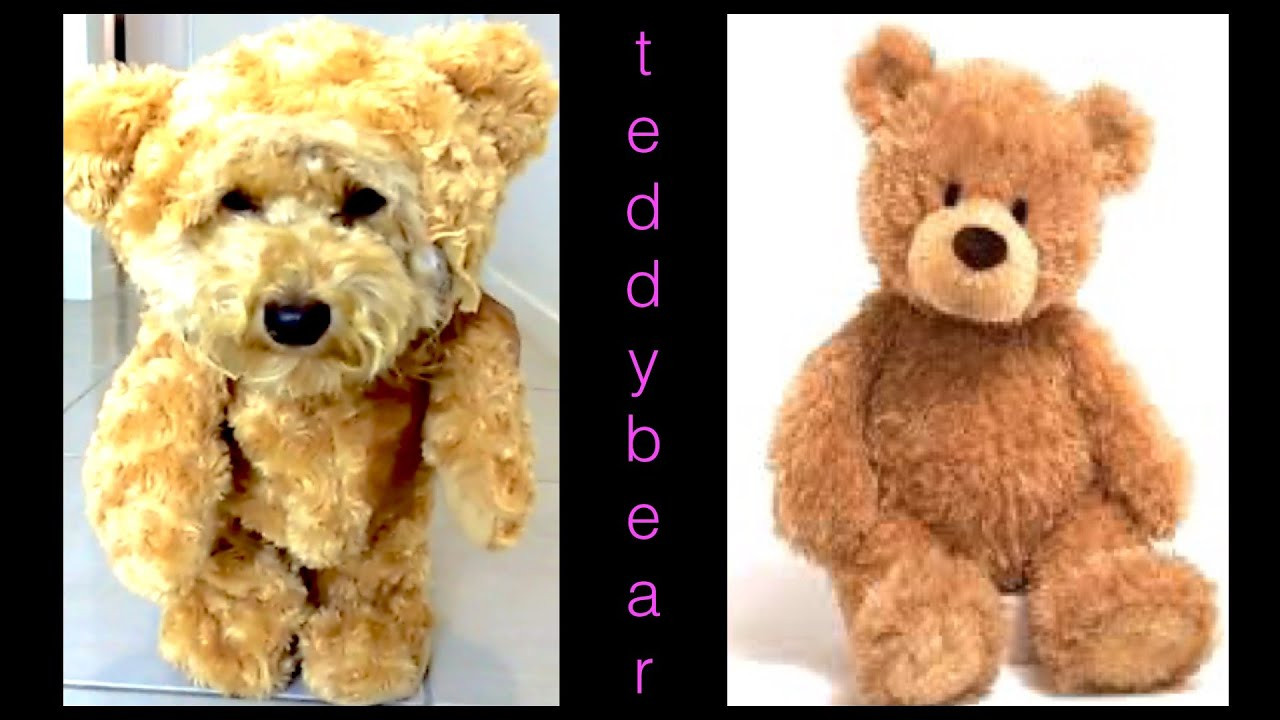 Best ideas about DIY Teddy Bear Costume . Save or Pin How to make TEDDY BEAR DOG COSTUME MUNCHKIN OUTFIT DIY Now.