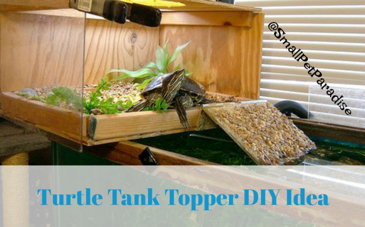 Best ideas about DIY Turtle Tank . Save or Pin Coolest Turtle Tank Topper Ideas – Small Pet Paradise Now.