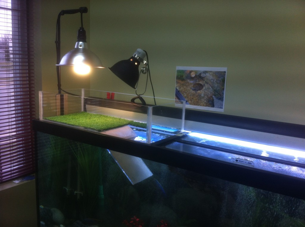 Best ideas about DIY Turtle Tank . Save or Pin DIY turtle dock Now.