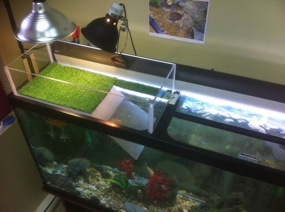Best ideas about DIY Turtle Tank . Save or Pin Turtle Topper Tank Basking Platform & Dock Spiffy Now.