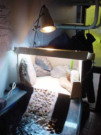 Best ideas about DIY Turtle Tank . Save or Pin The best pet turtle basking platform is custom made Pet Now.
