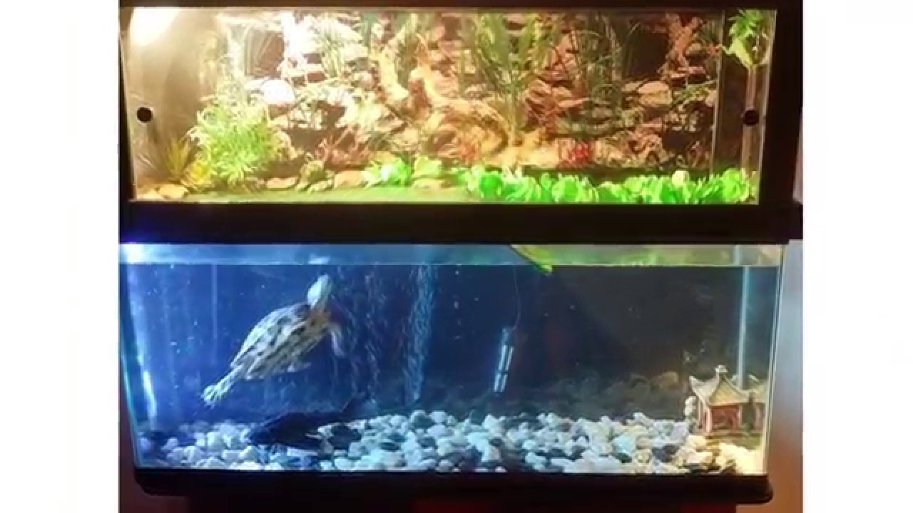 Best ideas about DIY Turtle Tank . Save or Pin DIY Turtle Tank Topper Red Eared Slider Now.