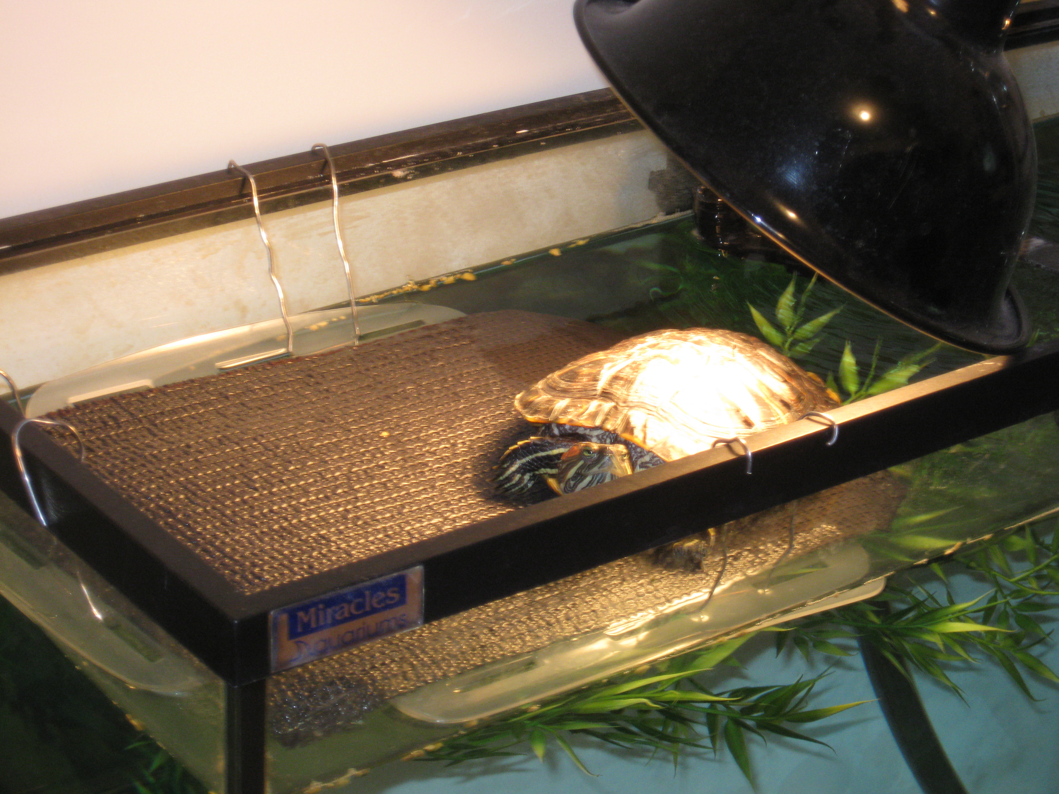 Best ideas about DIY Turtle Tank . Save or Pin homemade Now.