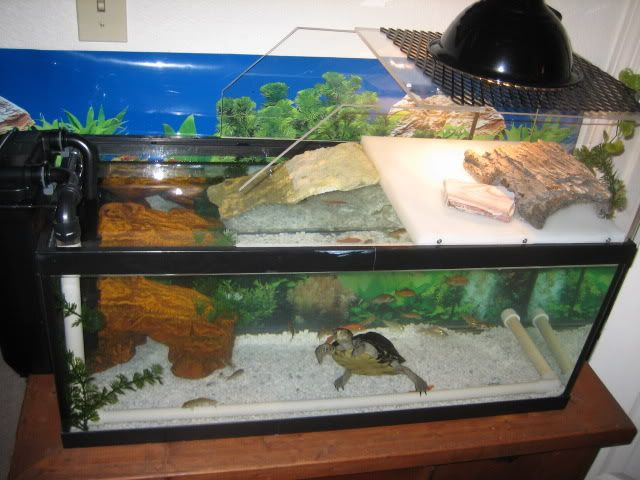 Best ideas about DIY Turtle Tank . Save or Pin DIY turtle topper Turtle Stuff Pinterest Now.