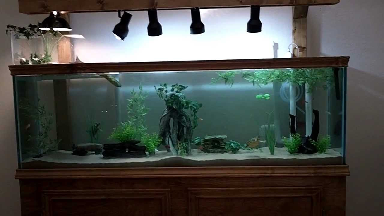 Best ideas about DIY Turtle Tank . Save or Pin 125 Gallon DIY Turtle munity Tank Now.