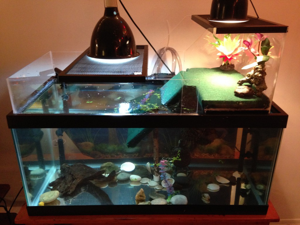 Best ideas about DIY Turtle Tank . Save or Pin Long Live Your Turtle Turtle Basking Dock DIY Tank Now.