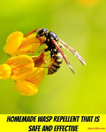 Best ideas about DIY Wasp Killer . Save or Pin Homemade Wasp Repellent That is Safe and Effective Now.