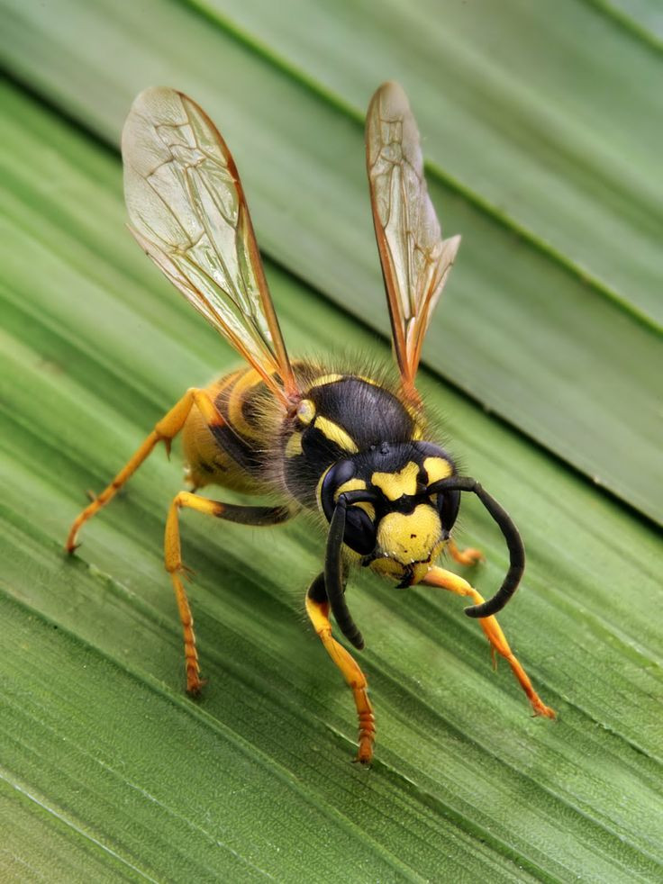 Best ideas about DIY Wasp Killer . Save or Pin How to Make Wasp Killer Now.