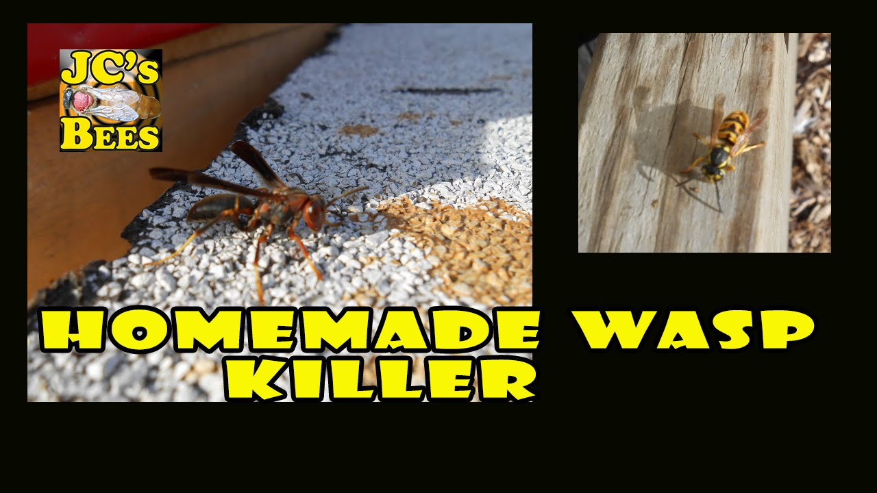 Best ideas about DIY Wasp Killer . Save or Pin Homemade Wasp Killer Now.