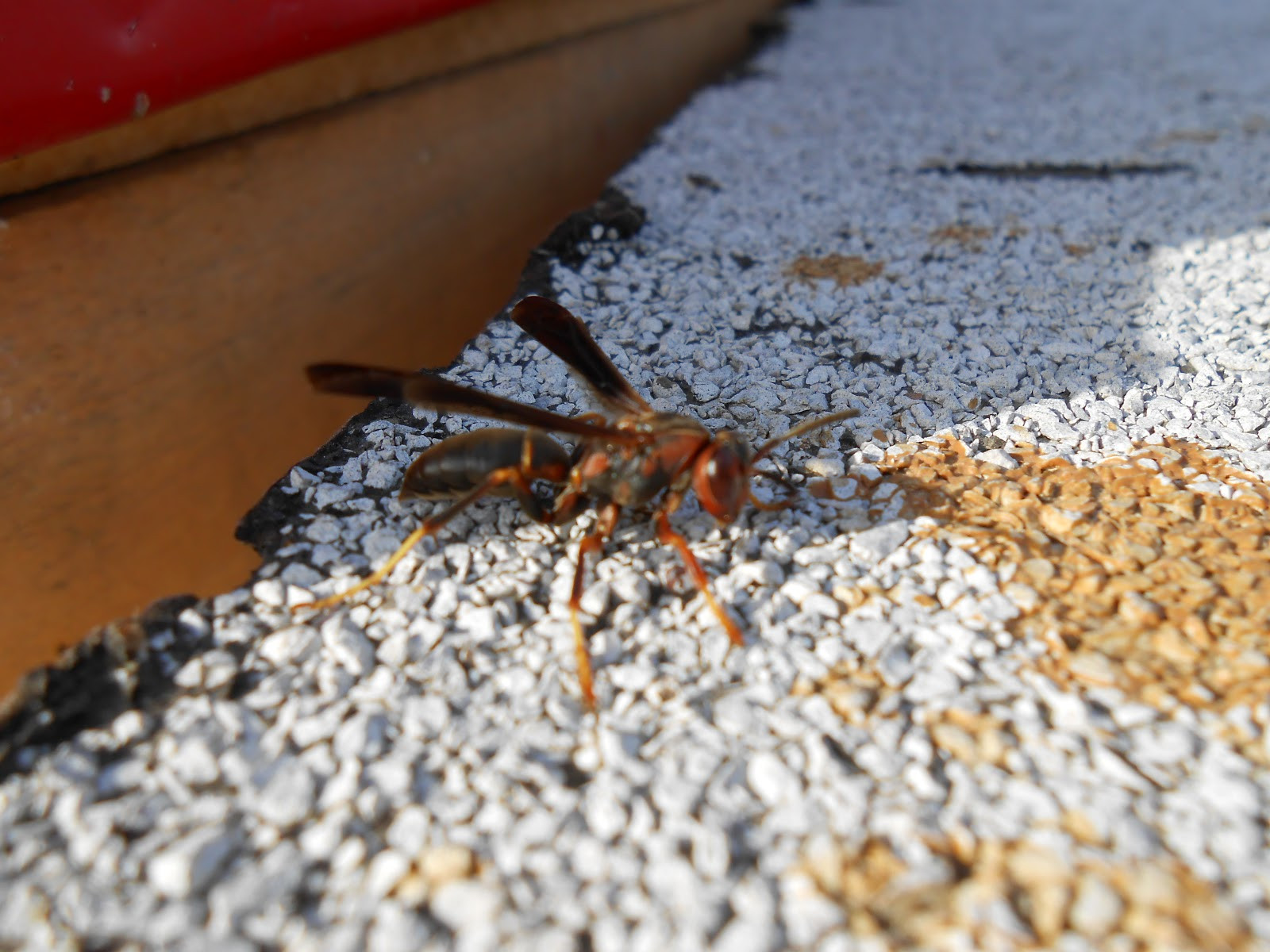 Best ideas about DIY Wasp Killer . Save or Pin Homemade Wasp Killer Spray Now.