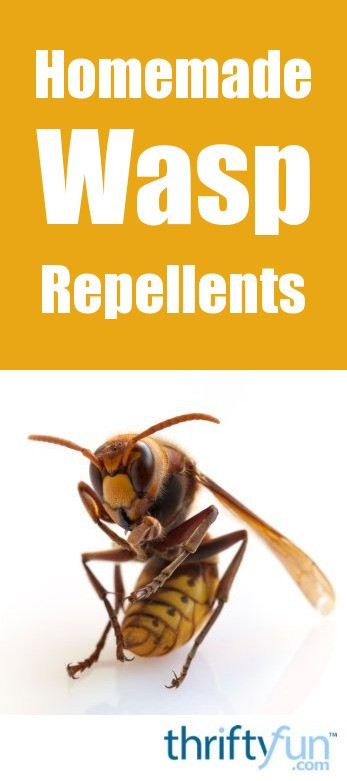 Best ideas about DIY Wasp Killer . Save or Pin Homemade Wasp Repellent Now.
