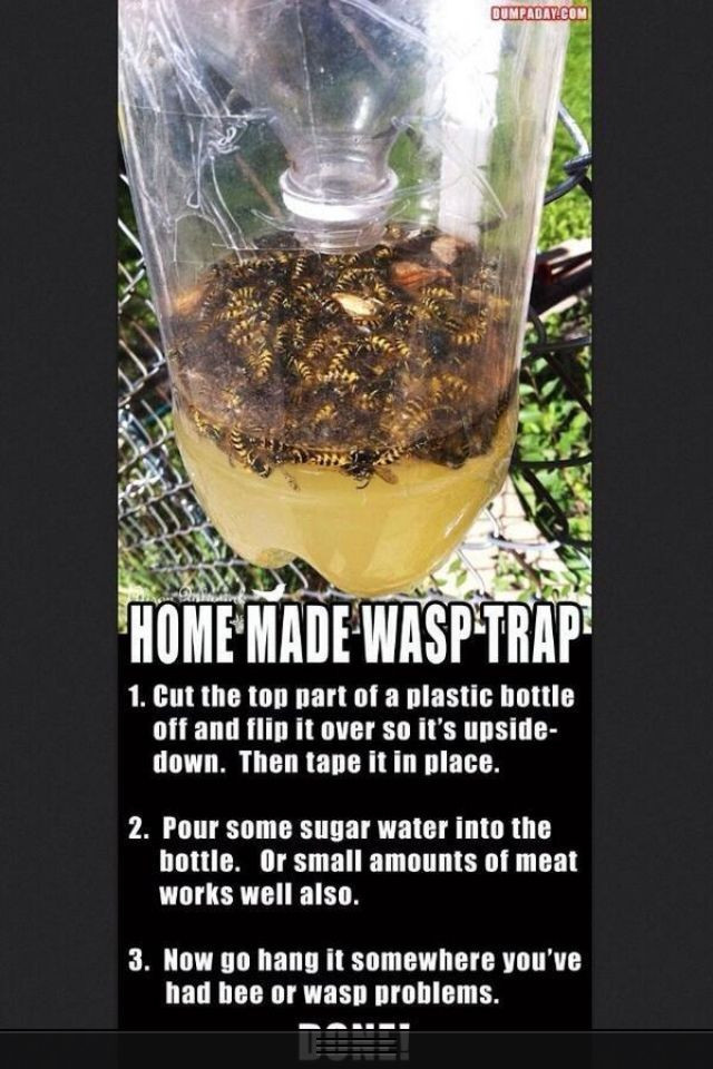 Best ideas about DIY Wasp Killer . Save or Pin Homemade wasp trap Everything Pinterest Now.