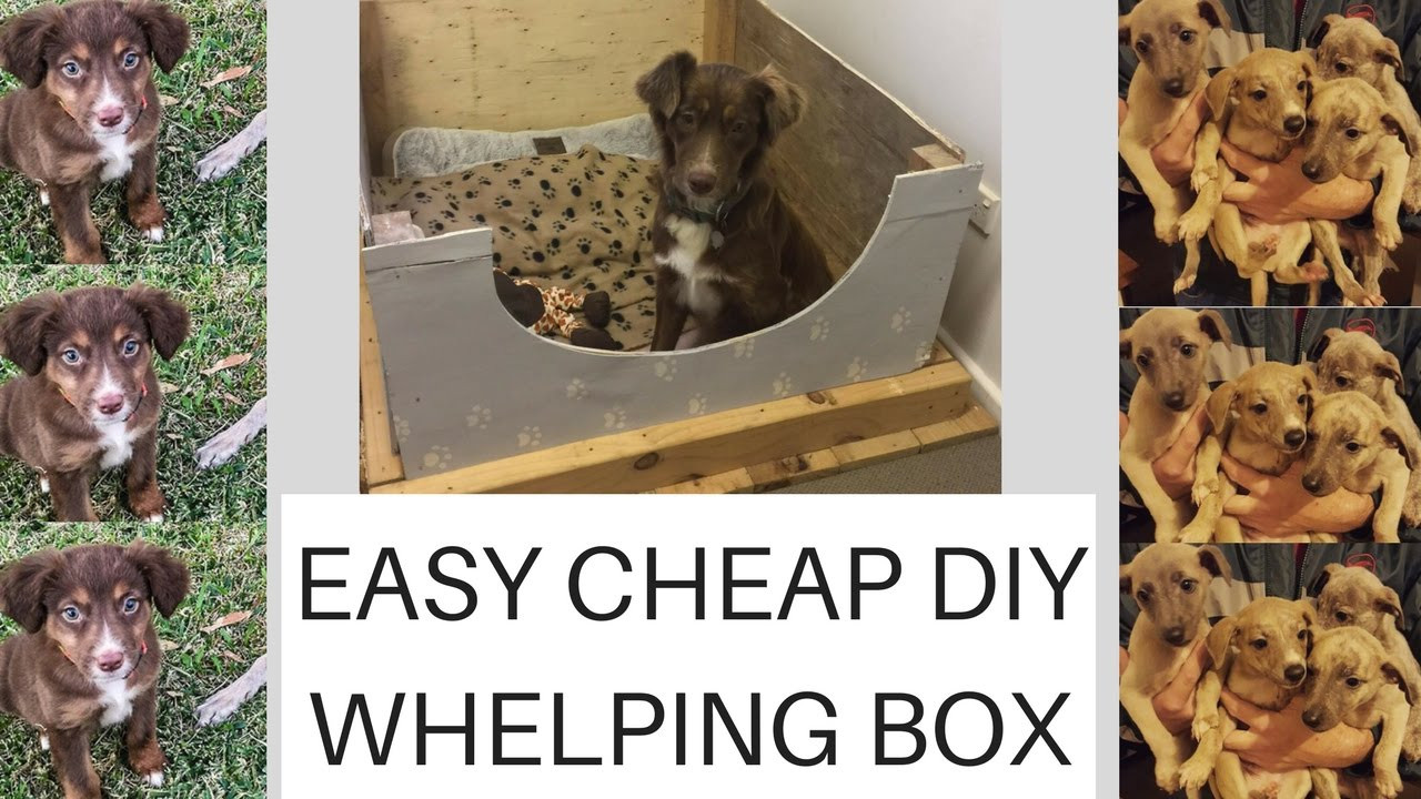 Best ideas about DIY Whelping Box . Save or Pin Easy Cheap Diy Whelping box plus PUPPY UPDATE Now.