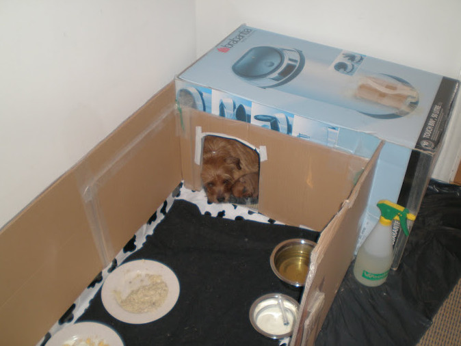 Best ideas about DIY Whelping Box . Save or Pin How to Build a Whelping Box for Small Dogs Now.