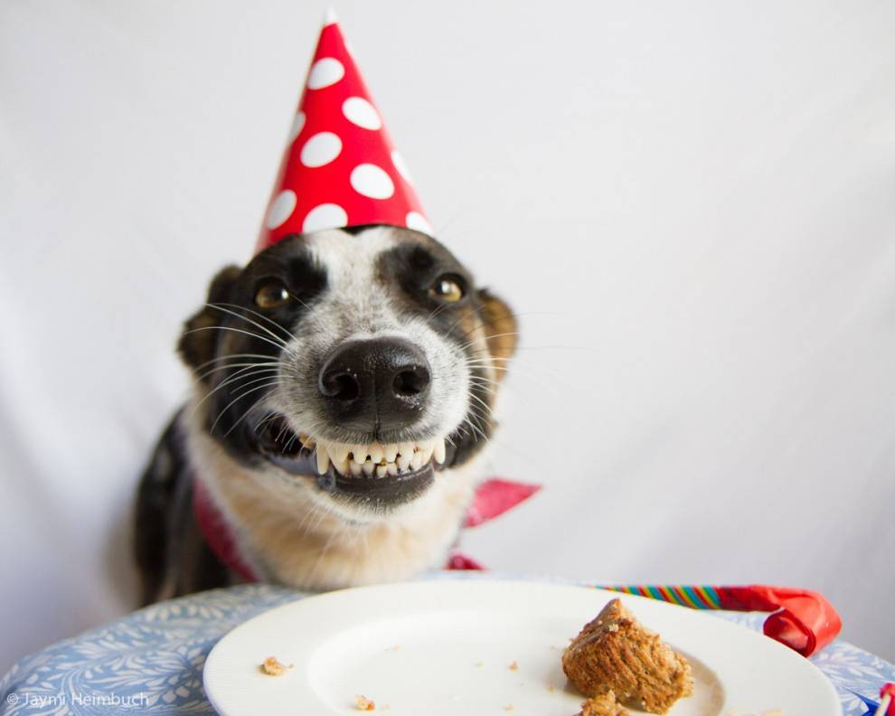 Best ideas about Dog Birthday Cake . Save or Pin How to make a dog birthday cake Now.