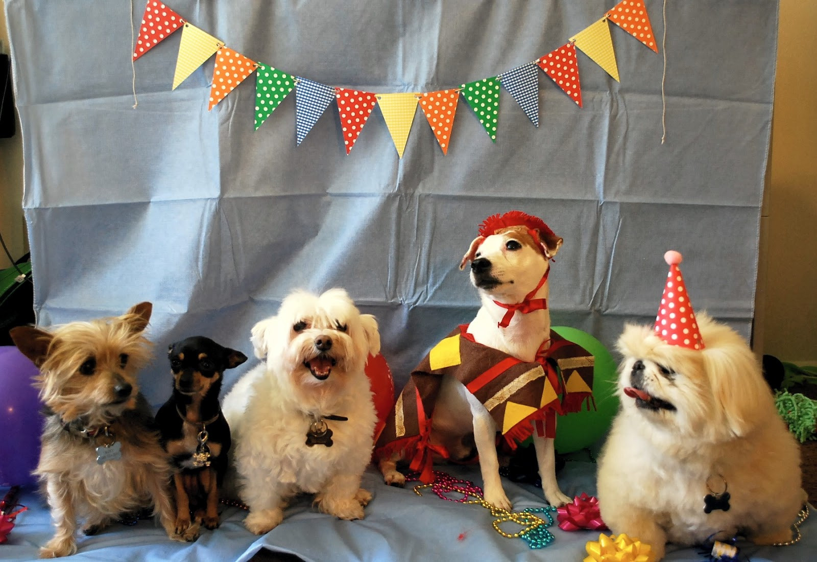 Best ideas about Dog Birthday Decorations . Save or Pin Daydreamer Creator DIY Extraordinaire Dog Birthday Party Now.