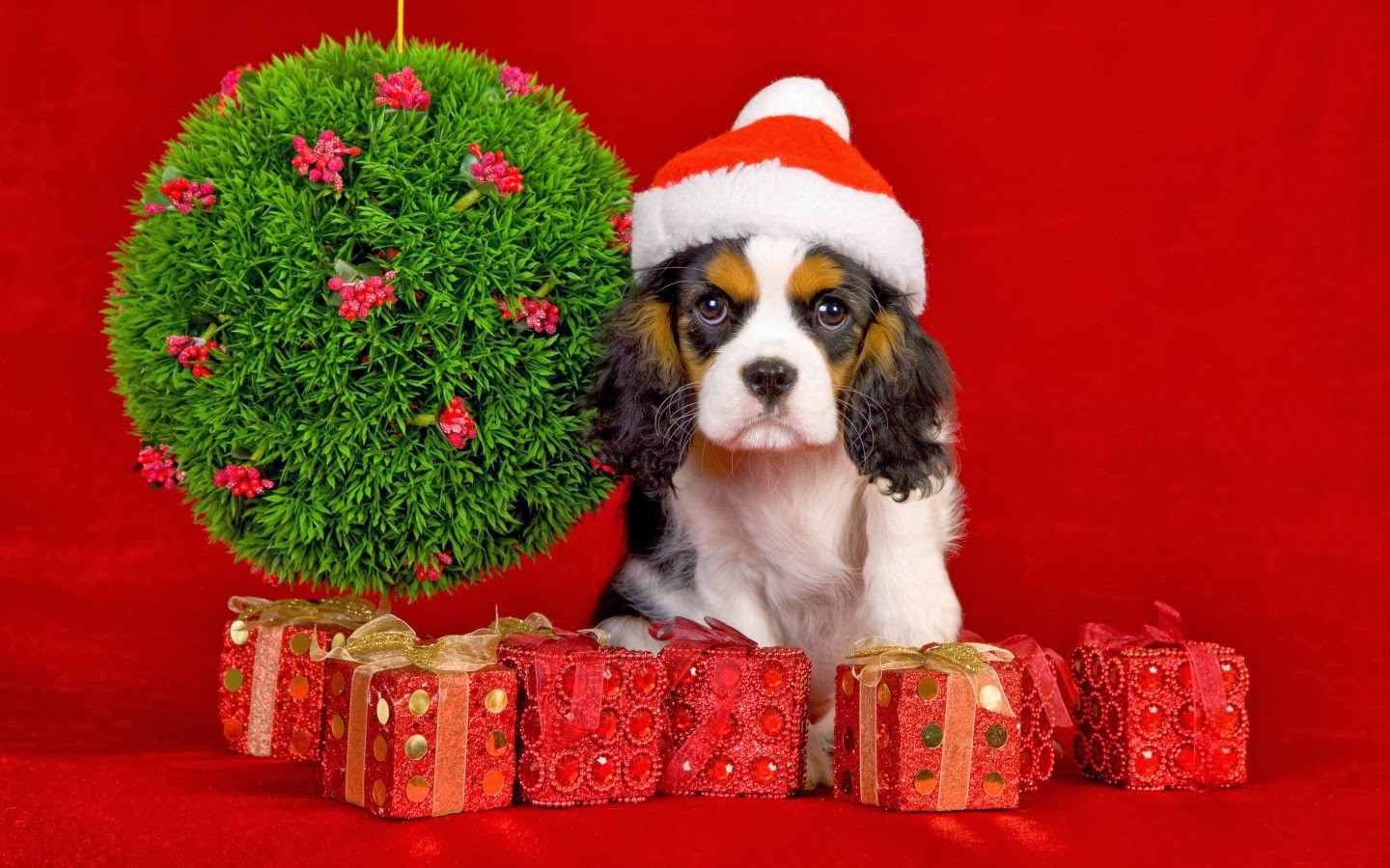 Best ideas about Dog Christmas Gift Ideas . Save or Pin Best Christmas Gift Ideas for your Dogs Now.