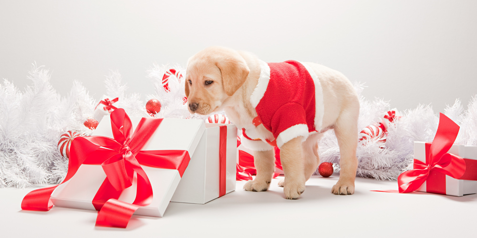 Best ideas about Dog Christmas Gift Ideas . Save or Pin Pet Gift Ideas What To Buy Your Dogs And Cats For Christmas Now.
