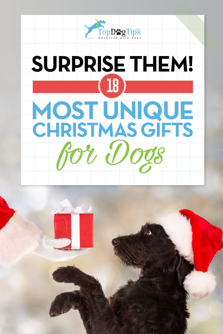 Best ideas about Dog Christmas Gift Ideas . Save or Pin 17 Best Christmas Gift Ideas for Dogs That ll Surprise You Now.