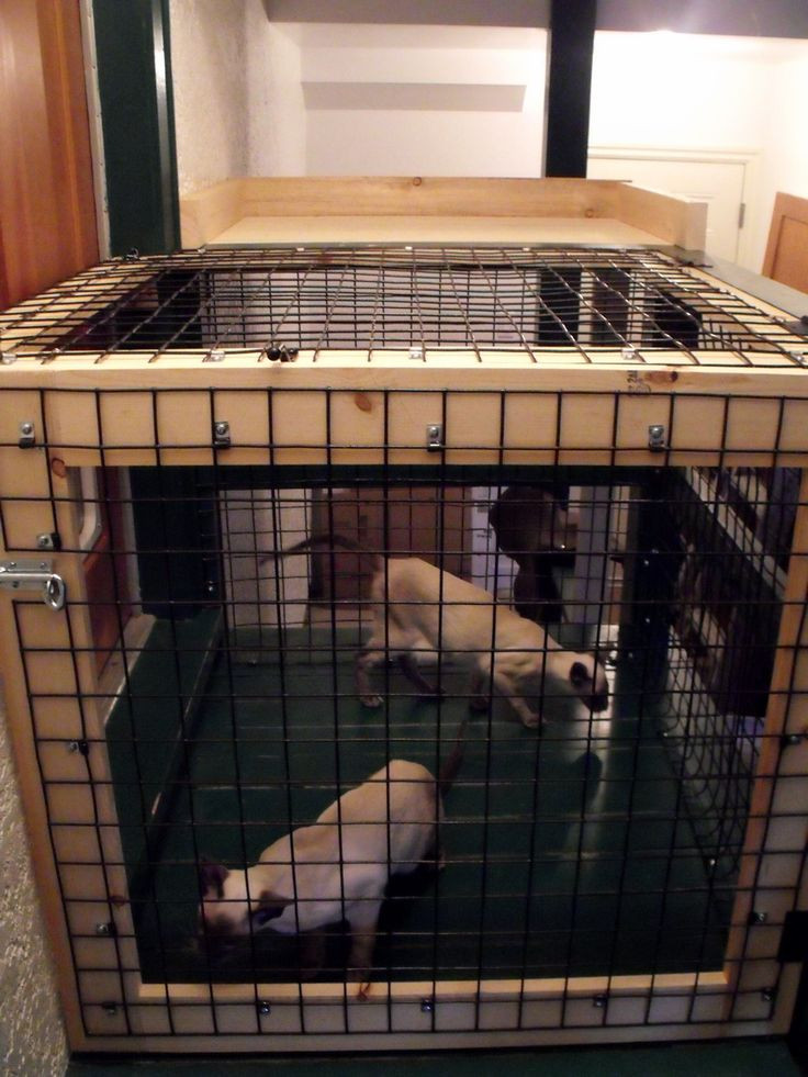 Best ideas about Dog Proof Cat Feeder DIY . Save or Pin Dog proof area for cat food and litter Beautiful World Now.