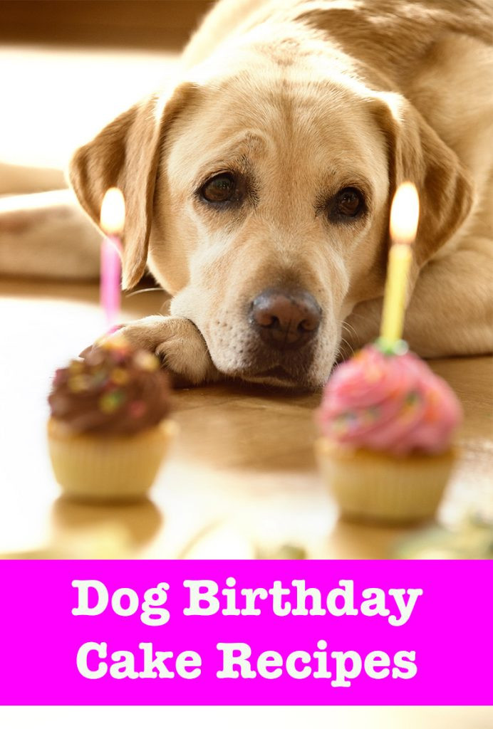 Best ideas about Doggie Birthday Cake . Save or Pin Dog Birthday Cake Recipes From Easy To Fancy Bakes Now.