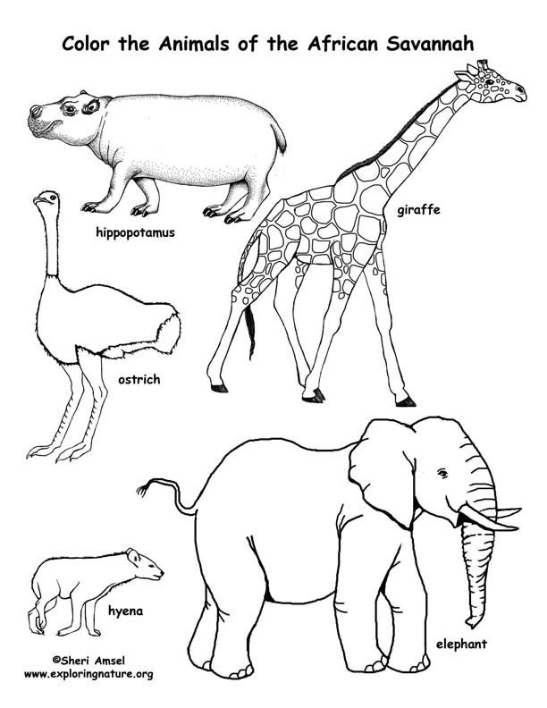Best ideas about Free Coloring Pages African Animals . Save or Pin Free Coloring Pages for Children of Color non mercial Now.