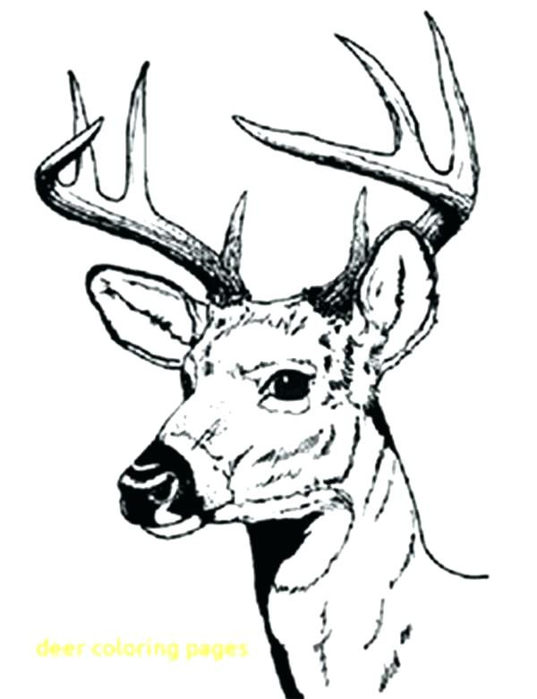 Best ideas about Free Coloring Pages Deer . Save or Pin Deer Hunting Coloring Pages at GetColorings Now.