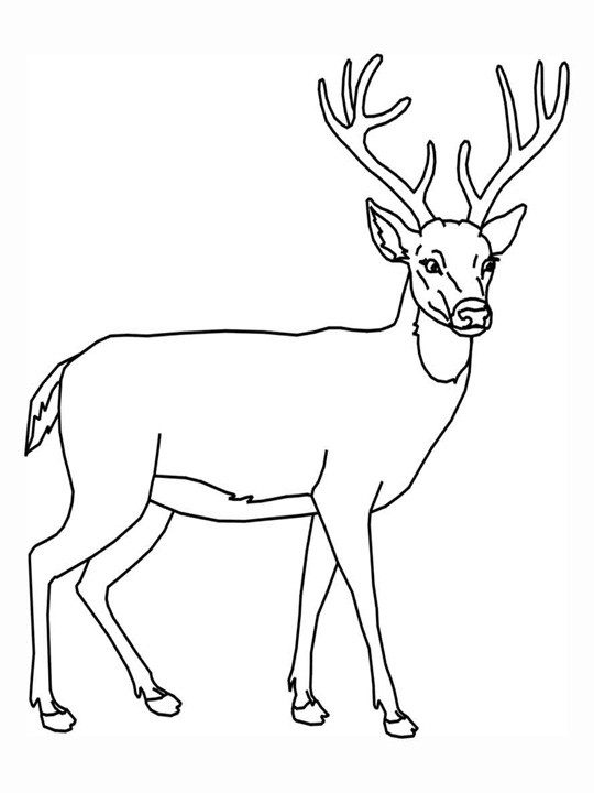 Best ideas about Free Coloring Pages Deer . Save or Pin For Education New Animal Deer Coloring Pages Now.