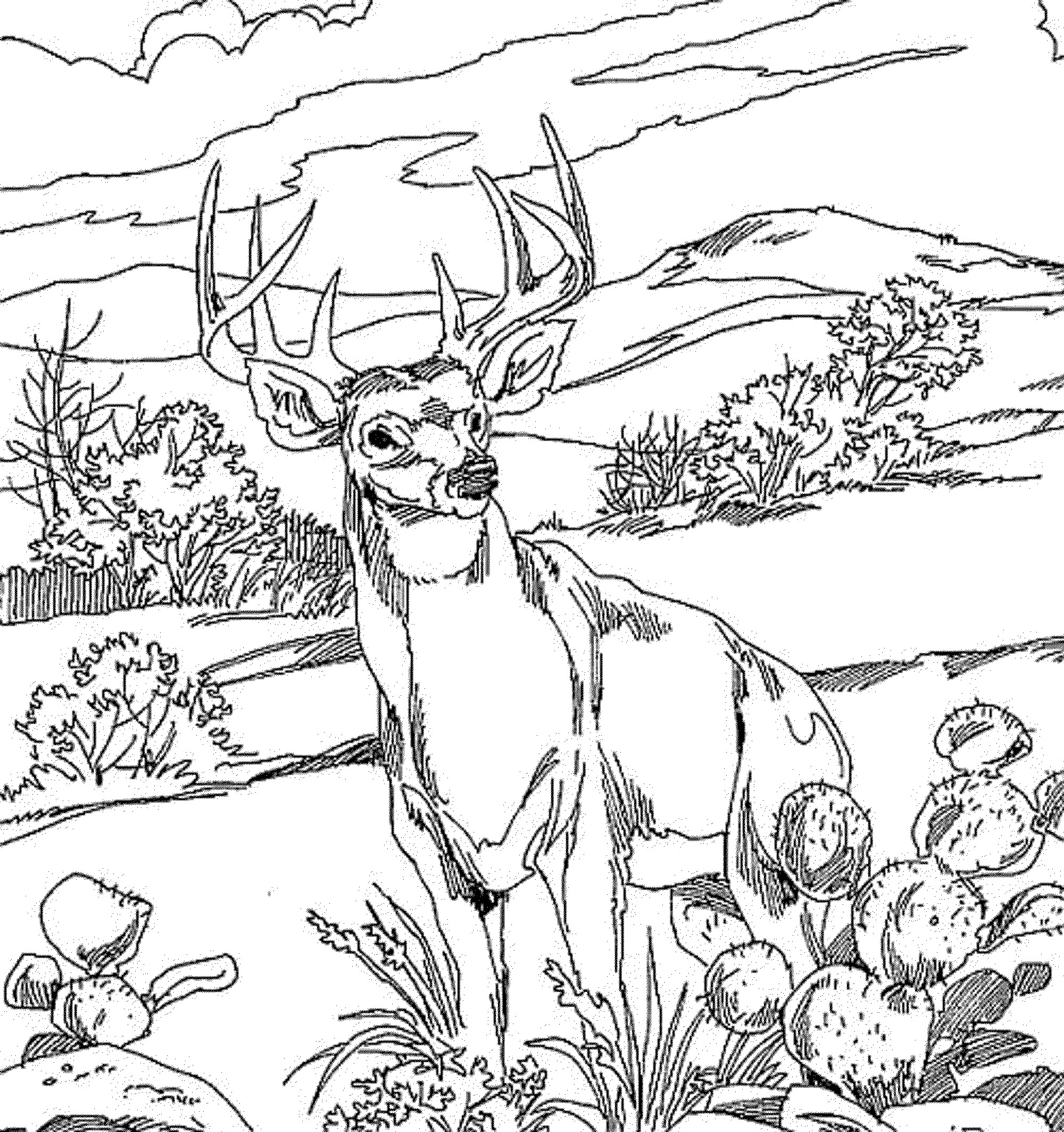 Best ideas about Free Coloring Pages Deer . Save or Pin Coloring Pages For Kids Deer Coloring Home Now.