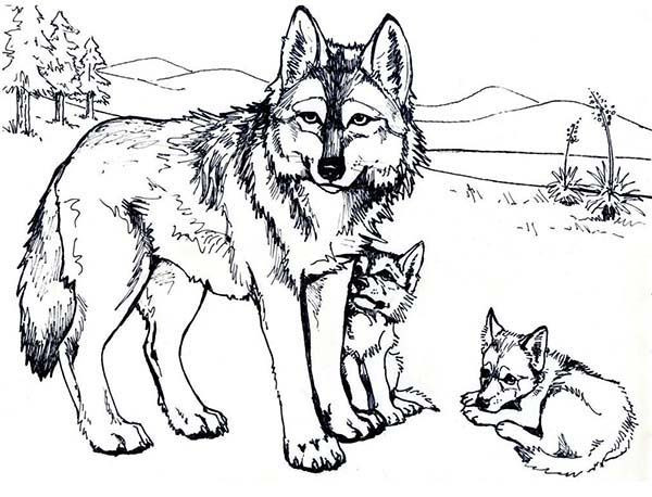 Best ideas about Free Coloring Pages Of Wolves . Save or Pin Wolf Coloring Pages Free Printable warnai Now.