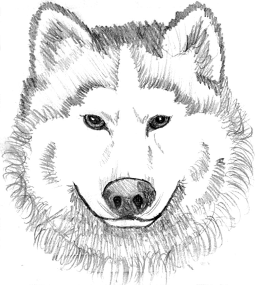 Best ideas about Free Coloring Pages Of Wolves . Save or Pin Print & Download Wolf Coloring Pages Theme Now.